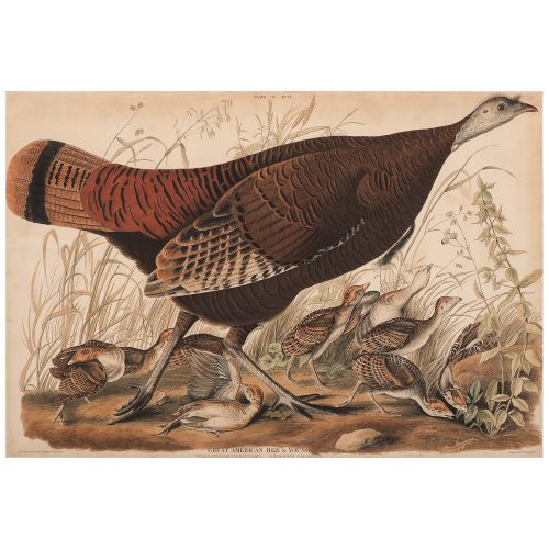 Audubon Double-Elephant Folio